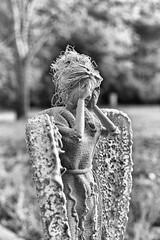 Weeping Angel (Jeff Buchbinder) Tags: canon5dmk3 m42 asahisupertakumar50mmf14 50mmf14 50mm blackandwhite bw weepingangel forcedperspective gegl doctorwho