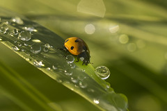 ladybug (Aleoko) Tags: 15challengeswinner flickrchallengewinner