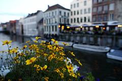 Gent, Belgium. () Tags: street flower beautiful canon river frank relax friend photographer belgium ngc streetphoto lys ghent gent  gand 6d riverlys  leicaelmaritr24mmf28