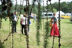 larch (Rambynas) Tags: larch lithuania lietuva zagare maumedis vynifestivalis