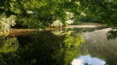 /   /    /    / ... (zeinabotalebi) Tags: lake trees reflection sun leaves ducks sky bluesky water sunrays sunray tree