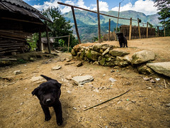 Sapa 09 (arsamie) Tags: sapa sa pa vietnam dog puppy black friend love happiness pet cute cuteness soil earth sand mountains north hmong rock play