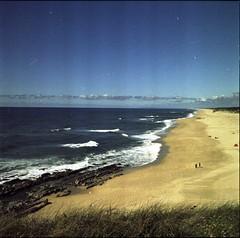 S. Pedro de Moel (Gonalo F. Silva - Film photography) Tags: yashica mat medium format film 120 kodak planta fotografia analgica cactus analog praia beach summer