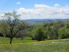 Trees and wildflowers, hillside at Vidikovac, Uvac Nature Reserve, Serbia (Paul McClure DC) Tags: uvac naturereserve serbia srbija balkan sjenica may2016 družiniće scenery
