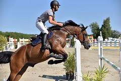 DSC_1168 (2) (ploufjf_64) Tags: paus show jumping chevaux pau 2016