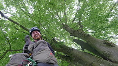Fagus sylvatica (arborist.ch) Tags: arborist treecare arboriculture tree treeclimbing baumpflege baum baumklettern buche fagus sylvatica