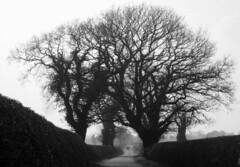 Wychough (Jeff Buck) Tags: cheshire bishopbennetway wychough