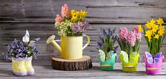 spring collection flowers potted plants daffodil hyacinth canterbury bells with butterfly pail and watering can (ProFlowers.com) Tags: wood flowers plant floral butterfly garden spring pastel can pot stump potted pail watering proflowers