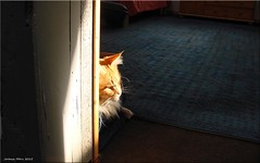 Sonnenlicht - sunlight