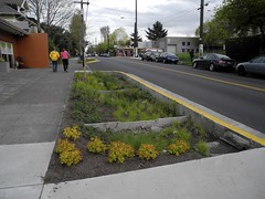 new bioswales (citymaus) Tags: street streets water rain st oregon portland sidewalk management pdx division rainwater stormwater improvements bioswale bioswales