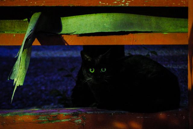 Today's Cat@2015-04-12