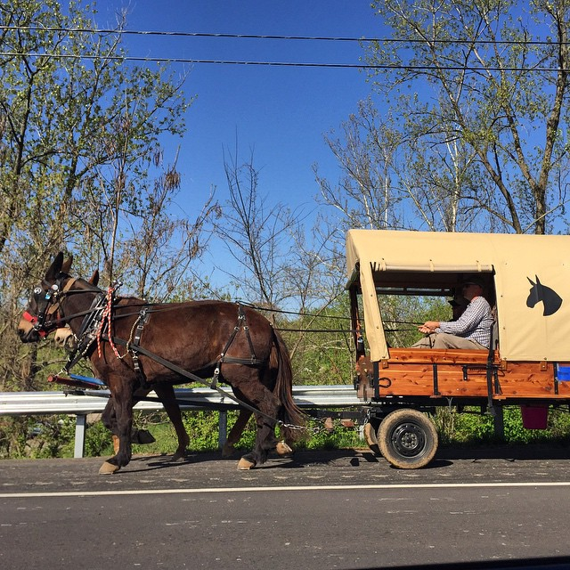 Leave now and you can be here. #MuleDay #Columbia #Tennessee  #mules everywhere #bluesky #parade