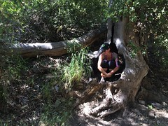 Day 134 (boxbabe86) Tags: tree nature valencia hiking tuesday april timer iphone day134 placeritacanyon humantripod 365days 10secondtimer twistedoldtreeoncanyontrail