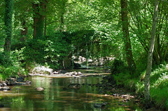 Chaillac (Indre) (sybarite48) Tags: bridge las rio ro forest river indre fiume rivire ponte most bosque pont brug brcke fluss bos wald floresta fort kpr foresta rivier nehir  orman     rzeka anglin         puante  chaillac  moulindeseillant