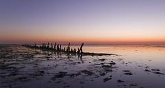 Waar ik graag mag zijn, 'Op 't Wad'... uitgeroepen tot het mooiste natuurgebied van Nederland. (Jan Wedema) Tags: jeeeweee janwedema photographer photography pentax k3 ricoh sigma 18 waddengebied waddenkust twad waddenfotograaf mooistenatuurgebiedvannederland
