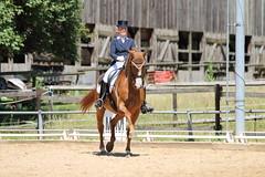 IMG_4621 (dreiwn) Tags: horse pony horseshow pferde pferd equestrian horseback reiten horseriding dressage reitturnier dressur reitsport dressyr dressuur ridingclub ridingarena pferdesport reitplatz reitverein dressurreiten dressurpferd dressurprfung tamronsp70200f28divcusd jugentturnier