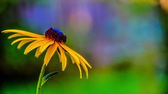 Nature.... (tomk630) Tags: light usa flower nature sunrise virginia bokeh