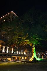 Illuminated tree (quinet) Tags: tree lights sarawak malaysia borneo arbre baum kuching beleuchtung lumires 2015