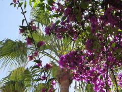 Casablanca Sqala_9588 (JespervdBerg) Tags: holiday spring 2016 africa northafrican tamazight amazigh arab arabic moroccanstyle moroccan morocco maroc marocain marokkaans marokko casablanca lasqala sqala
