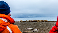 Walrus Hunters @ Forlandet National Park, Arctic (x_tan) Tags: arctic canonef28300mmf3556lisusm canoneos5dmarkiii nordreisfjordennationalpark spitsbergen svalbard svalbardandjanmayen sj walrus