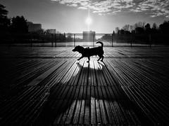 Roma - 2016 (Enzo D.) Tags: biancoenero blackandwhite dog eur italia italy laghetto olympus pond roma rome silhouette wwwenzodemartinocom lazio it