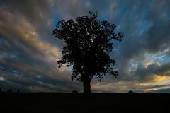 Tree Silhouette (Costigano) Tags: silhouette carton kildare tree clouds sky dusk sundown sunset ireland irish