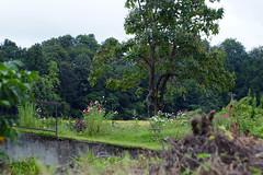 (  / Yorozuna) Tags:  field  flo flower   cosmosflower cosmos  plant     tree  countryside  tokamachi  niigata japan color   pentaxautotakumar55mmf18