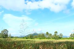 IMG_9548 -  Nam Sang Wai (Mak_Ho) Tags:  namsangwai  yuenlong  newterritories  lemoneucalyptus  vegetation  tree  leaf  grassland  scenic  scenicphoto  scenicsites  scenicspot  nature  natureenvironment  photography   hike  canon 700d hongkonglandscape  hongkong landscape
