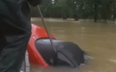 ABP News on Twitter (contfeed) Tags: dzhr8viurg twitter floodwater location https tweet sinking world news video abpnewstv