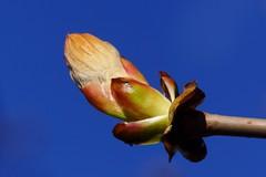 Spring (osto) Tags: denmark europa europe sony zealand scandinavia danmark slt a77 sjlland osto alpha77 osto april2015