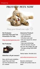 1 (89) (CATS - DOGS) Tags: street cats animals cat kittens stray kedi sokak yavru kediler kedileri trkyetur