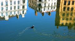 """Tsssssuuuuiiittt, so beautiful nests in that city"" !! (Croix-roussien) Tags: city france reflection bird strange jaune river lyon upsidedown ngc facades bleu reflet inversion oiseau fleuve saône quaisdesaône"
