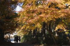 ASO # 19 (f l a g e o l e t) Tags: travel autumn japan dc nikon f14 sigma kumamoto 30mm hsm d7000