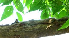 Squirrel Inogasira-zoo Tokyo kichijoji4 (sapphire_rouge) Tags: sculpture animal zoo squirrel squirrels carving chipmunk samurai kichijoji yoroi     musashino    inogashirazoo inogasirapark  kichijuoji