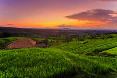 Jatiluwih Paddy Terrace, Bali, Indonesia | Sunrise (Keris Tuah) Tags: ocean wood morning travel blue autumn light sunset red sea summer vacation sky orange sun sunlight mountain lake color reflection tree green art tourism beach nature water beautiful beauty grass yellow architecture clouds rural forest sunrise river season landscape evening 3d sand colorful asia view outdoor background horizon hill scenic sunny scene malaysia penang recovery treatment keristuah