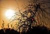 20150327_009_2 (まさちゃん) Tags: silhouette 夕陽 夕焼け シルエット 茜色 夕暮れ時 夕焼け空