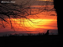 sunset and crow (pinkystar_84) Tags: sunset red sky parco sun colors lumix tramonto natura panasonic verona cielo crow sole colori rami corvo sfondo profilo valeggiosulmincio sigurta lz30 fotoamoremio