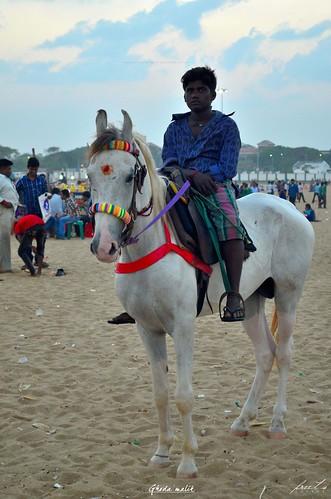 horse owner/घोड़ा मालिक