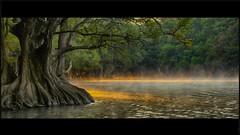LA LUZ (NIKONIANO) Tags: light lake tree luz water landscape lago surreal paisaje paths follaje moctezuma michoacano sabinos nikoniano caminodeluz lightpaths waterenvirons ahuehuetedemoctezuma sergioalfaroromero lagosdemichoacán lugaresdemichoacán arbóreo lagosdeméxico camécuaro paisajedemichoacán ahuehutes enmichoacán