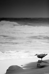 watchful (grafficartistg4) Tags: ocean camera storm beach wet water rain weather oregon canon photography waves unitedstates pacificocean shore land digitalcamera splash dslr digitalphotography lincolncity 30d 70200mm splashing apsc telephotozoom f432 ©joshuapeterson2016
