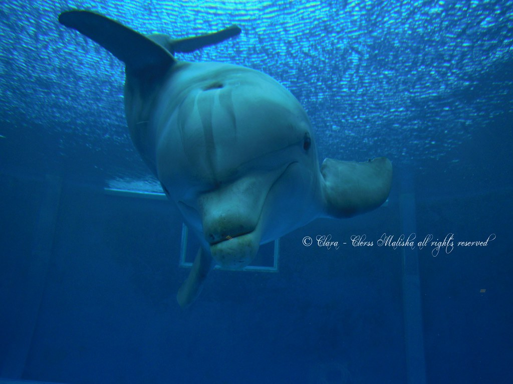 cetacea liguria - photo#19