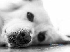 non servono parole... (Sebastiano Milardo Italy www.sebastianomilardo.it) Tags: freud mydog cane mypet 2016