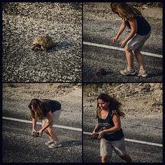 Rescue (Melissa Maples) Tags: akseki turkey trkiye asia  nikon d5100   nikkor afs 18200mm f3556g 18200mmf3556g vr ibrad square 11 multipanel tetraptych terrapin tortoise turtle rescue street road turk woman
