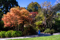 Lady in Blue (Jocey K) Tags: flowers trees newzealand christchurch people spring shadows skybridge azalea ilamgardens
