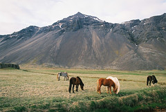 (Bazzerio) Tags: 35mm bazzerio analogue analog iceland horse vintage mountain roadtrip grass valley lake wild camping camp travel