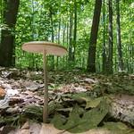 Mushroom Among Giants thumbnail