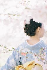 (Mizulys*) Tags:      japanesetradition pure fresh canon spring cherryblossom sakura blue japan kimono