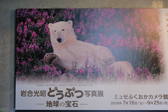 20160723-DS7_0641.jpg (d3_plus) Tags:  aiafnikkor28105mmf3545d d700 nature animalphotographer aiafzoomnikkor28105mmf3545d 28105mmf3545af sea   toyamapref  hokurikuregion  28105mmf3545d japan   exhibition nikon art nikkor 28105 28105mm  281053545  nikond700  scenery   zoomlense toyama 28105mmf3545   photographer  sky