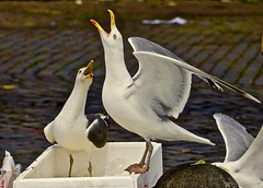 Birds (heiko.moser) Tags: bird mwe vogel vgel animal animale tier tiere natur nature natura outdoor canon hamburg wow