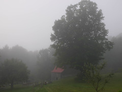 Summer's almost over (grongar) Tags: fog morning barn maple tree yard